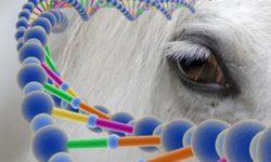 DNA equino