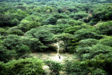 Jadav Molai Forest