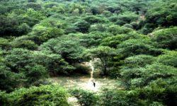 Jadav Molai Forest