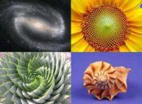 spirale aurea