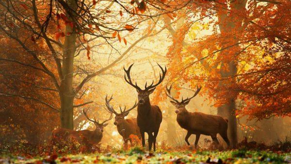 deer forest leaves autumn grass rays sun