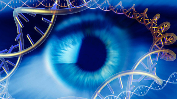 Original caption: Genetics research, conceptual computer artwork. Human eye surrounded by molecules of DNA