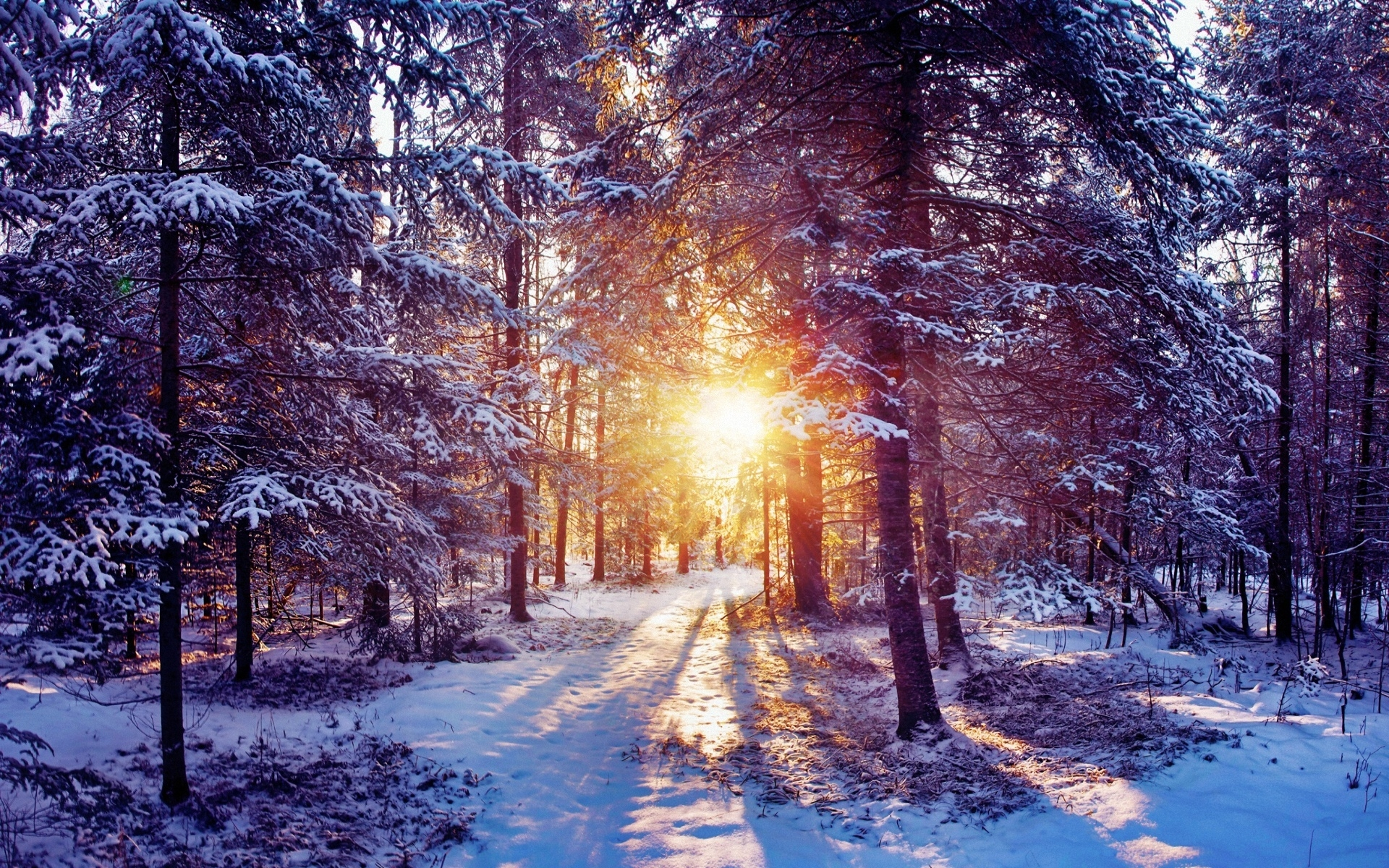 sun light trees forest bush snow
