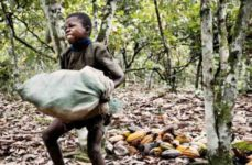 Cocoa Child Laborer