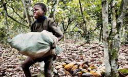 Cocoa Child Laborer