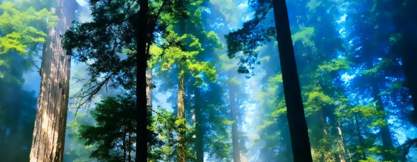 Energia degli alberi