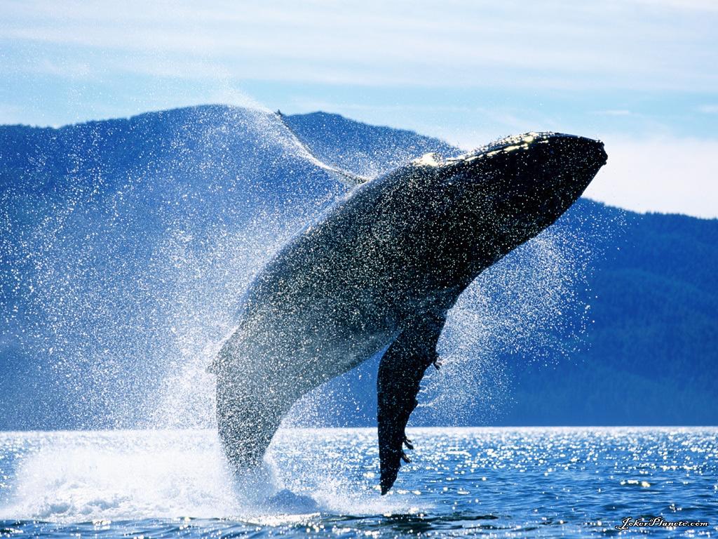 Salto della balena