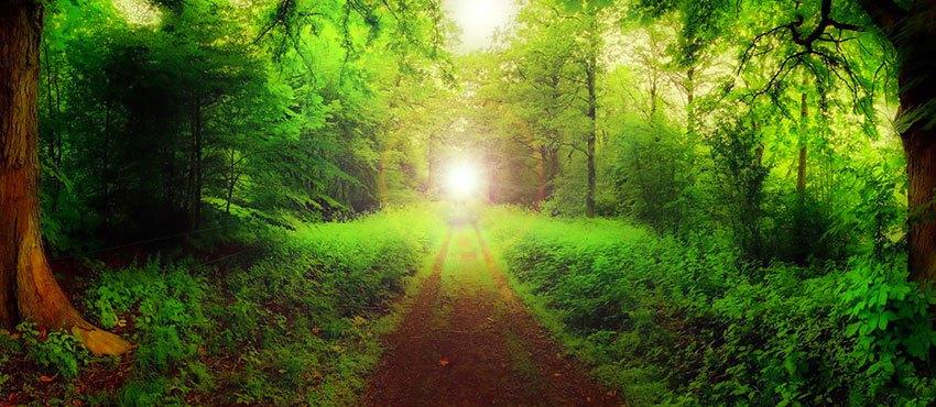 Sentiero verso la coscienza