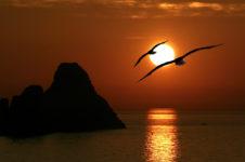 Gabbiani in partenza verso il tramonto sul mare