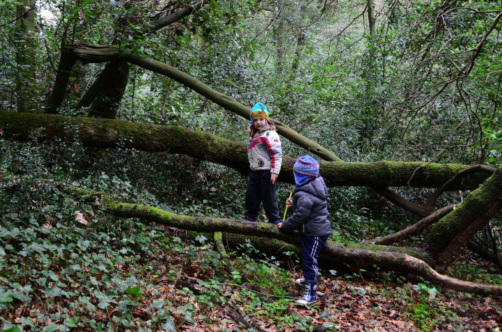 All'Asilo nel Bosco di Lanuvio i bambini hanno la possibilità di arrampicarsi e giocare all'aperto in sicurezza, ma liberi di sperimentare anche il rischio