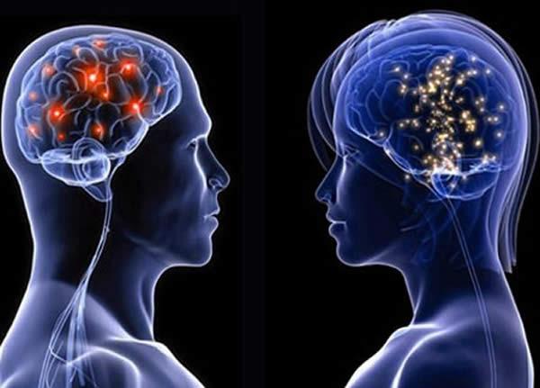 Differenze tra cervello maschile e cervello femminile