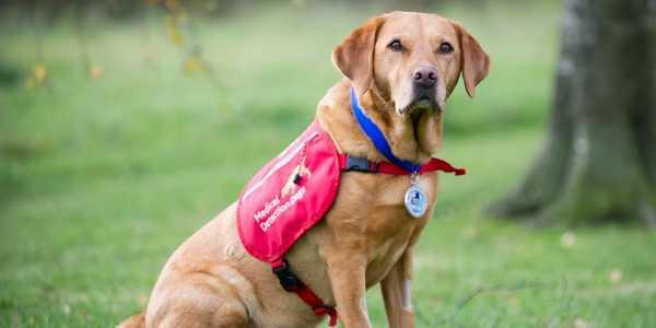 Cani Annusa Tumori - Medical Detetction Dogs