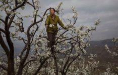 Donna ape impollina un albero, Cina