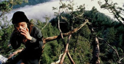 julia Hill sulla sequoia