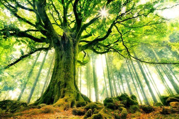 Risultati immagini per piante intelligenti