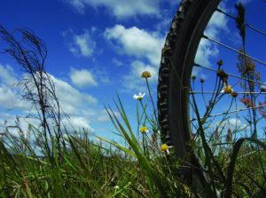 ruota di bicicletta