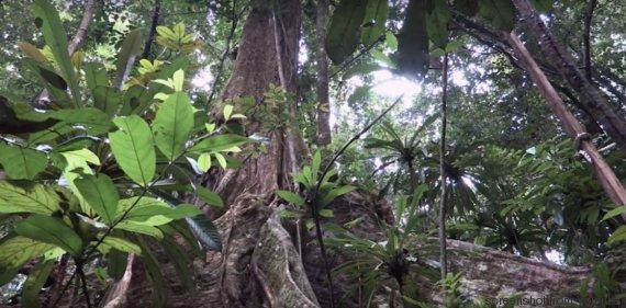effetto greening foresta
