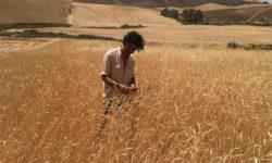 Giuseppe Li Rosi, agricoltore Siciliano e convinto sostenitore del ritorno ai Semi Antichi