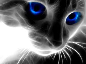 gatto con magici occhi blu