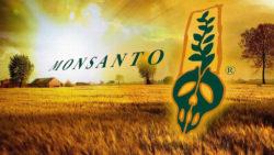 Ogm Monsanto