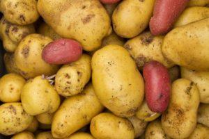 Solanina nelle patate