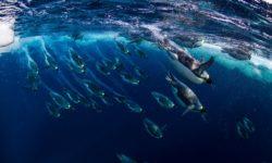 Il mega santuario marino in Antartide è realtà