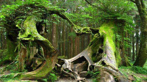 Hoia baciu la foresta spettrale della transilvania for Pianta della foresta di pioppo