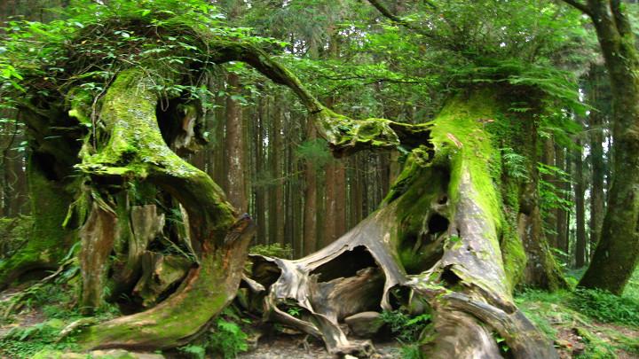 Hoia baciu la foresta spettrale della transilvania for Cabine della foresta lacustre