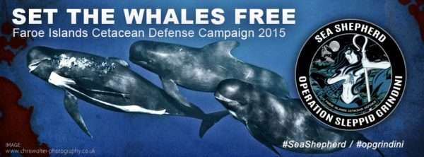 Whales free