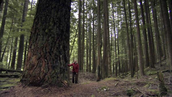 L'ecologa Suzanne Simard in una foresta di abeti