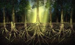Rete di comunicazione fra alberi