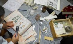 Sarà pubblicato il Manoscritto Voynich, un libro che nessuno potràleggere!