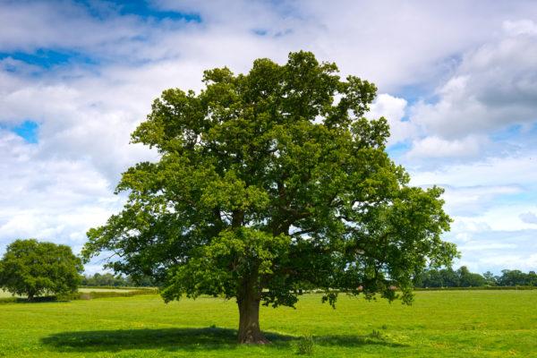 Gli alberi parlano, conservano, litigano. Come noi uomini: e quanto ci assomigliano