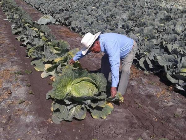 Don José Carmen Garcia Martinez con le sue piante