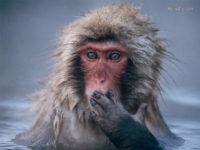 """Massa Critica e """"la centesima scimmia"""""""