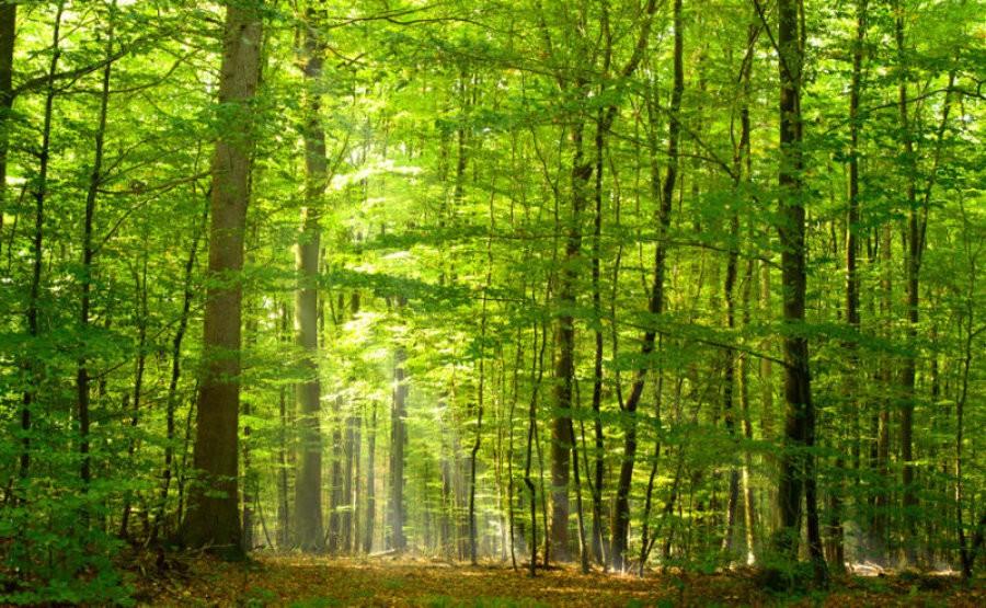 Bagni... di bosco: rinforzano le difese immunitarie