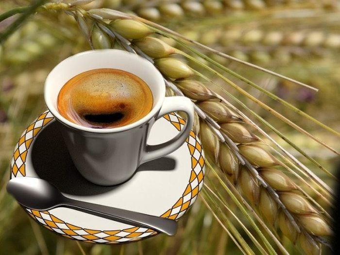 Caffè d'Orzo Immagine creata da CaffèBook - i diritti sono riservati.