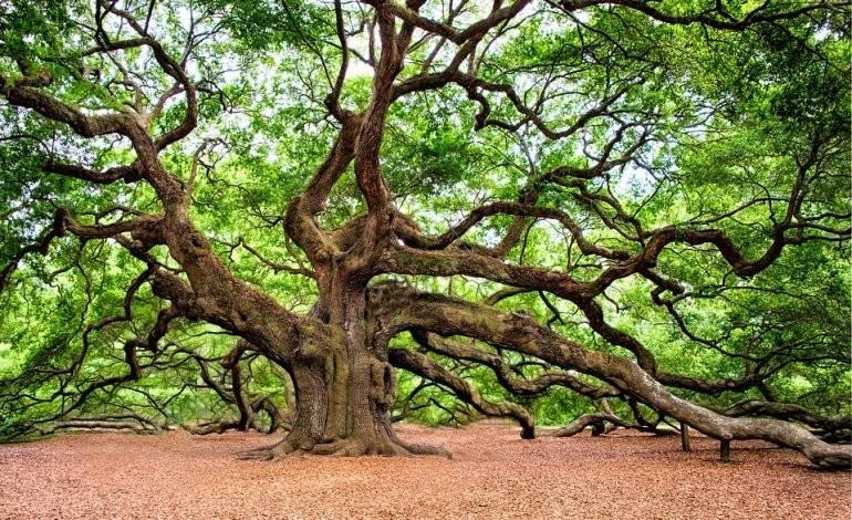 Risultato immagini per alberi