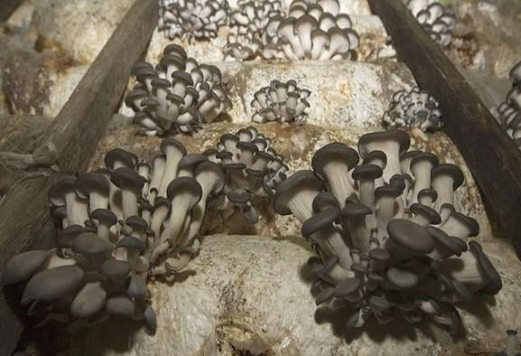 Risultato immagini per Funghi neri in grado di mangiare le radiazioni