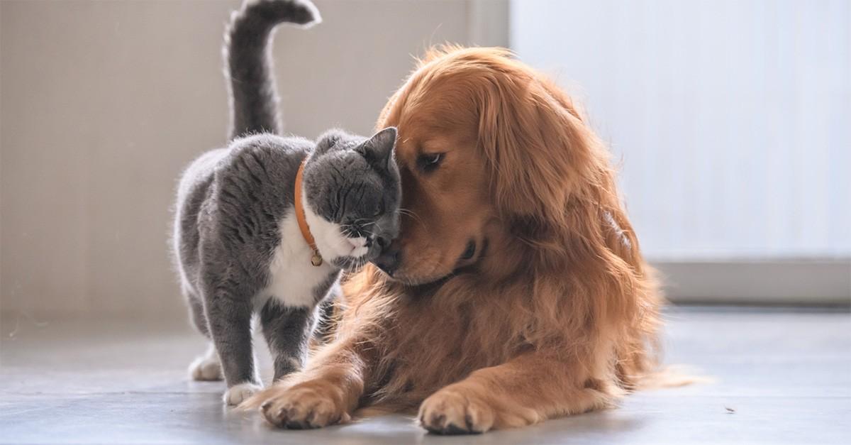 Coronavirus, le cinque linee guida per la pulizia di cani e gatti ...