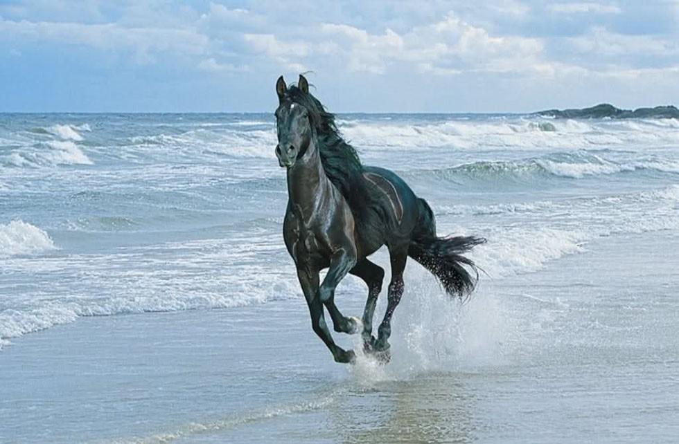 Cavallo in corsa sulla riva del mare | Centumcellae News
